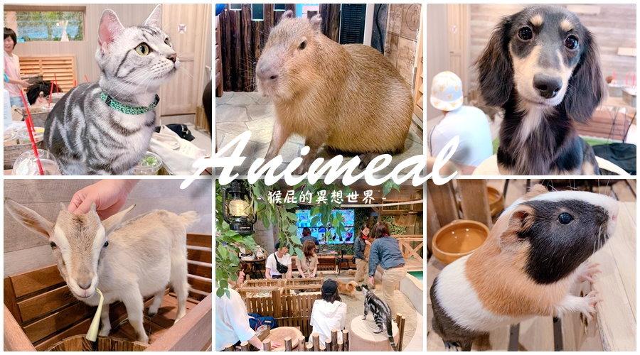 【日本大阪咖啡廳】超療癒大阪水豚君咖啡廳Animeal,可以跟動物互動的咖啡廳!大阪超可愛迷你動物園咖啡廳!