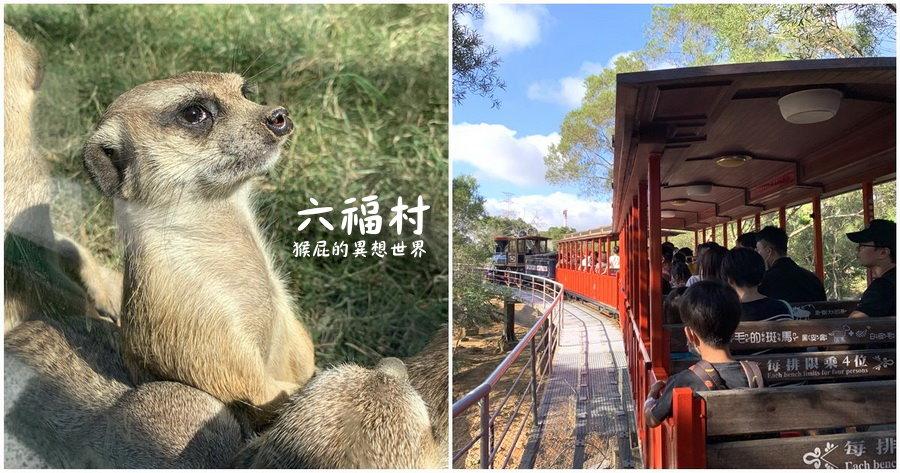 【新竹景點】六福村主題樂園《墓碑鎮-厄鈴惡靈》萬聖節期間限定活動!台灣最具規模的開放式野生動物園!六福村夜間遊行超精彩!