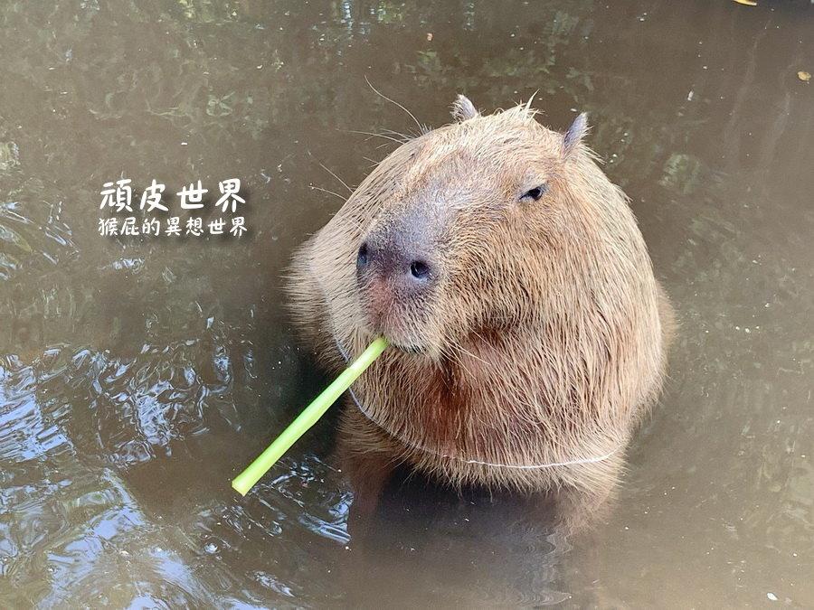 【台南景點推薦】台南學甲頑皮世界野生動物園門票!KKday專屬優惠!