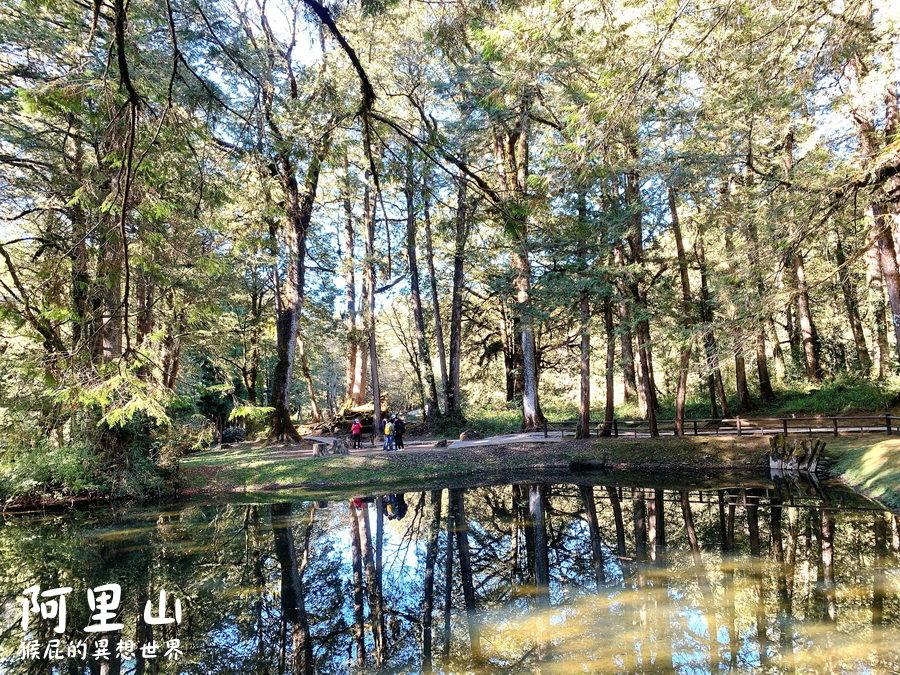 【阿里山景點】阿里山怎麼玩?20個阿里山森林遊樂園區必玩景點!姊妹潭、天空步道、神木等順遊路線!