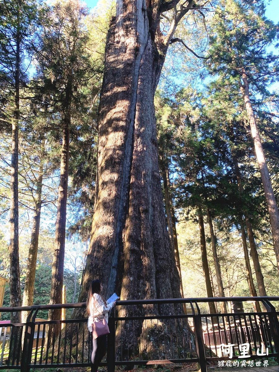 【阿里山景點】阿里山怎麼玩?20個阿里山森林遊樂園區必玩景點!姊妹潭、天空步道、神木等順遊路線! @猴屁的異想世界