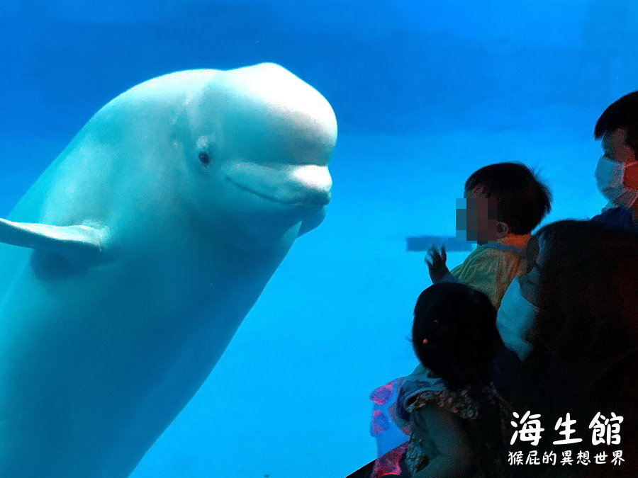 【墾丁景點】全台最大屏東墾丁海生館!小白鯨超級可愛!偶像劇必拍景點!海生館門票優惠! @猴屁的異想世界