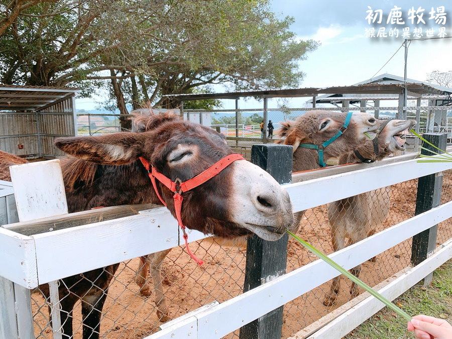 台東初鹿牧場好玩嗎?超多可愛動物享受大自然!初鹿牧場冰淇淋好好吃!